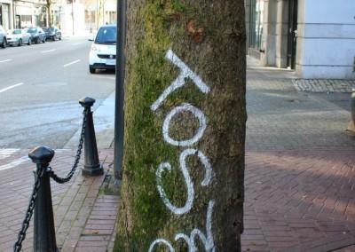 City Tree_06