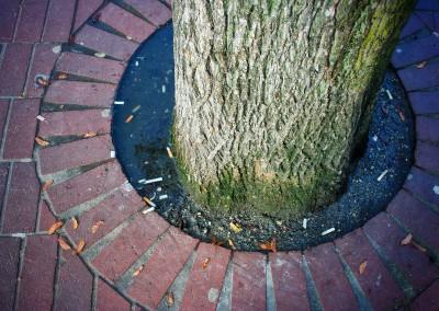 City Tree_07