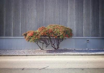 City Tree_09
