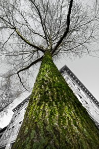 City Tree_03 by Arno Apeldoorn