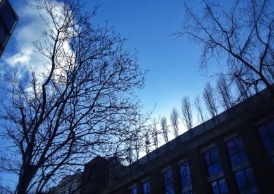 City Tree_02