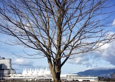 City Tree_04