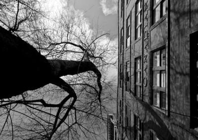 City Tree_01 by Arno Apeldoorn
