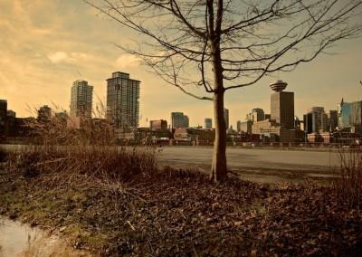 City Tree_02 by Arno Apeldoorn