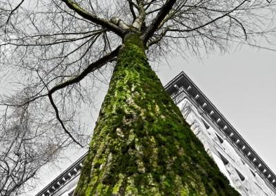 City Tree_03 by Arno Apeldoorn
